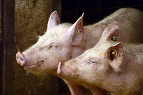 Új állatvakcina-gyártó és -fejlesztő központ épül