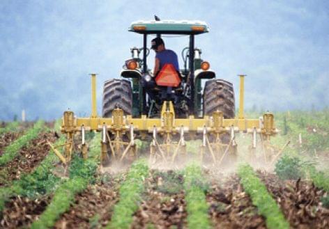 Zöld utat adott az EU a lisztkukacnak, mint élelmiszer: Magyarország ellenzi a döntést