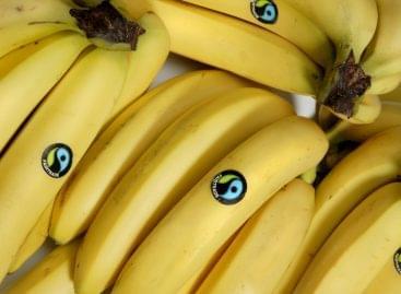 A banán a legnépszerűbb gyümölcs