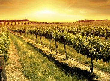 Spanyolország, a fenntartható borok földje
