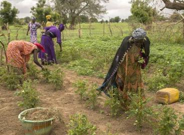 FAO: A természeti katasztrófák kockázatának csökkentésével nagyot nyernének a kistermelők