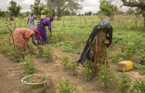 (HU) FAO: A természeti katasztrófák kockázatának csökkentésével nagyot nyernének a kistermelők