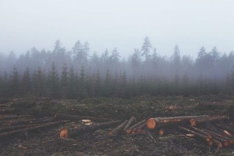 """Nestlé: a mezőgazdasági árucikkek 77 százaléka """"erdőirtás-mentes"""""""