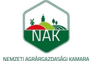 Összefogtak a hazai hagymatermesztők, hogy folyamatosan legyen magyar hagyma a piacon