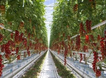 Nagy István: az üvegházak komoly erőforrást jelentenek a hazai zöldségtermesztésben