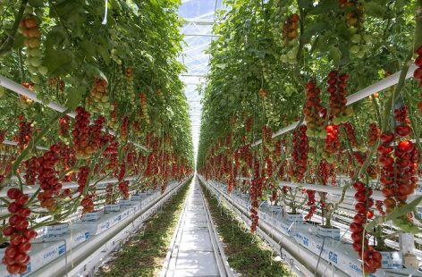 Nagy István: greenhouse is a serious resource for domestic vegetable production