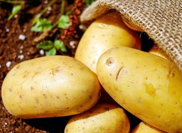 Carrefour To Roll Out Sustainably Grown Potatoes