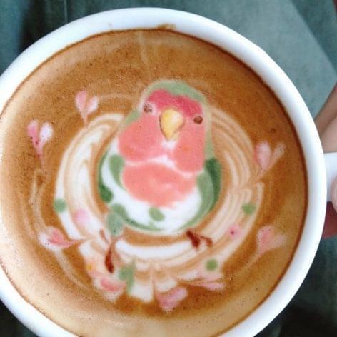 A koffein és az ornitológia – A nap képe