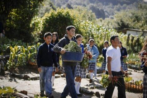 FAO: Egészséges és fenntartható étrendet garantálhat a jövő élelmiszerlánca