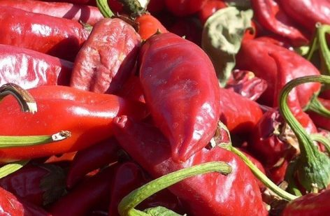 An exhibition was opened on the history of the Szegedi paprika in the Memorial Park of Ópusztaszer