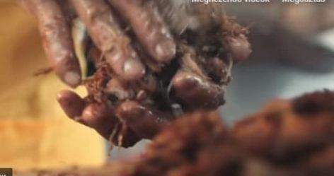 A taco krónikái – A nap videója