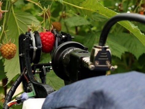 Málnaszedő robottal segítenék a brit gazdák munkáját