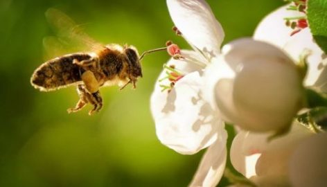 Beporzó programot indít a méhek védelméért a Lidl