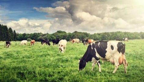 Az ír fogyasztók nagyon is felelősnek érzik magukat a klímaváltozásért