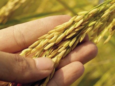 Lassan olvadoznak a nemzetközi élelmiszerárak