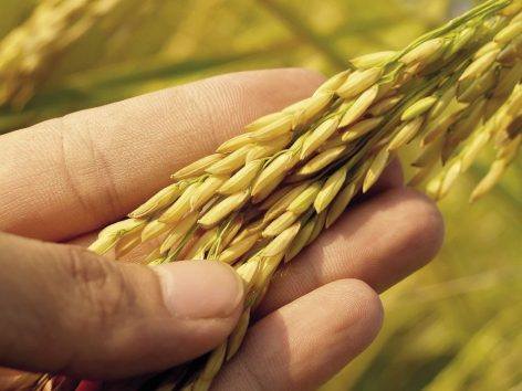 International food prices are slowly decreasing