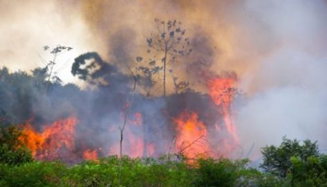 Brazil Agribusiness Joins With NGOs To Call For Action On Amazon