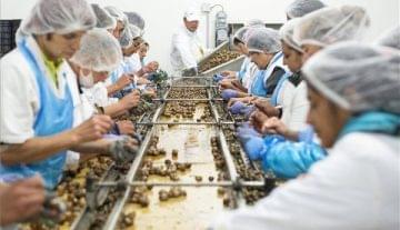 A snail processing plant was built in Kisvárda