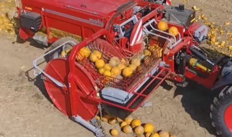 An unbelievable way of harvesting pumpkin seeds – Video of the day