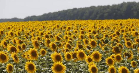 FAO: Nem drágult a nemzetközi élelmiszerkosár