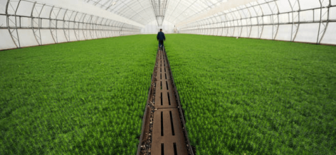 FAO: Az élelmiszerpazarlás jelentős csökkentése kritikus a fenntartható jövőért