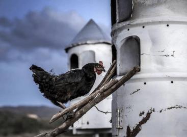 """FAO: Gabona """"boom"""", de csökkenő állati fehérje és banánbetegség jellemezte 2019-et"""
