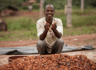 Mars: 3,5 millió kakaópalánta, több mint 270 ezer támogatott kistermelő és egy 1 milliárd dolláros befektetés a fenntartható kakaótermesztésért