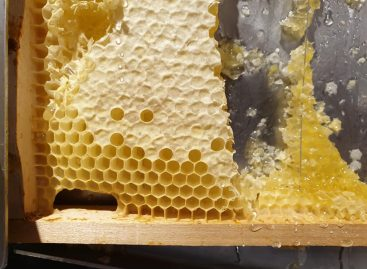 On a Hungarian initiative, the origin marking requirements of honey mixtures may become stricter