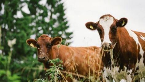 Karbonmentes tejtermékek 2035-re a Valiotól