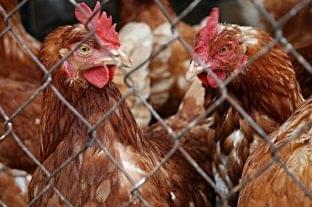 Szerdától a pultból kínált baromfi-, juh- és kecskehús esetében is fel kell tüntetni a származási országot
