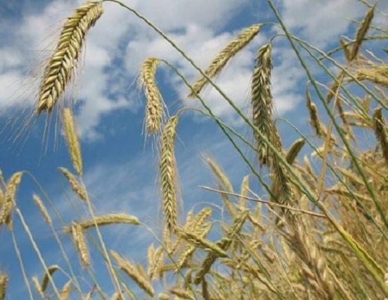 Mabisz: kétmilliárd forinttal emelkedett a mezőgazdasági biztosítás díjához nyújtott támogatási keret