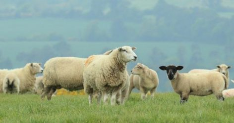 UK Farm Bill To Be Introduced This Month