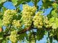 Magyar borászati szakbemutatót tartanak Krakkóban