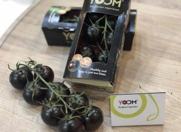 A Syngenta YOOM™ paradicsoma nyerte az idei Fruit Logistica Innovációs Nagydíját