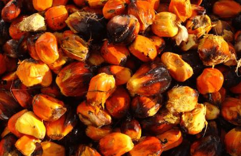 FAO: Februári visszaesés a globális élelmiszerárakban