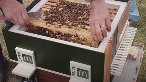A Tiny Bee Restaurant as an Actual Hive – Video of the day
