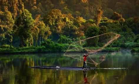 ENSZ: A világ erdeinek csökkenésével nő a bennük élő biológiai sokféleség jelentősége