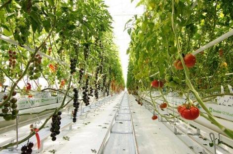 Elkészült a Syngenta modern paradicsom-bemutatóközpontja Hollandiában