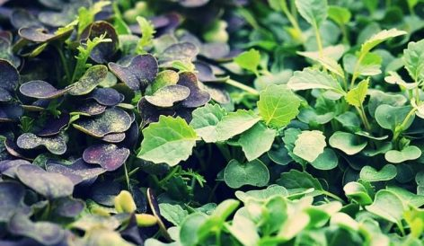 Függőleges kertek a Coop Dániától
