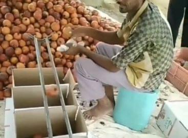 Hagymaválogatás tegnapután – A nap videója