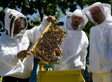 Koronavírus: ebben az országban a méhészet lehet a járvány legnagyobb nyertese
