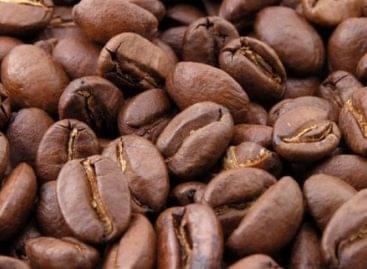 Elfeledett fajta jelentheti a kávétermesztés jövőjét