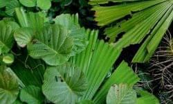 A növények is esznek műanyagot