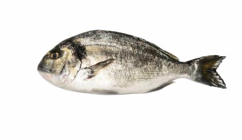 Elismerést kapott a Philosofish három termékéért