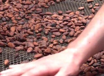 A csokoládékészítés művészete – A nap videója