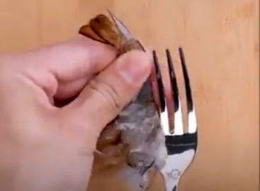 Food peeling – Video of the day