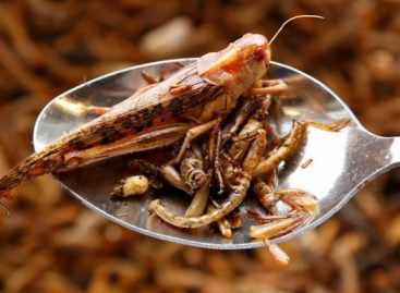 Ötödével csökkenhet a szójalábnyom a rovarélelmiszerek megjelenésével