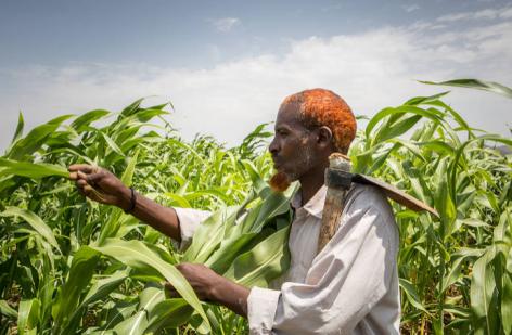 Tovább erősödtek az élelmiszerárak a nemzetközi piacokon