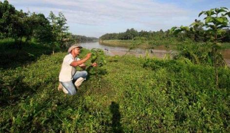 Hárommillió fát ültet a Nestlé Malajziában 2023-ra