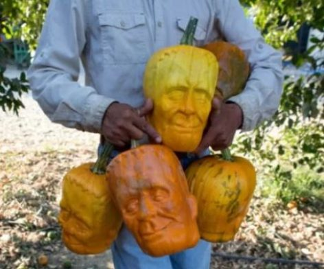 Convenience Halloween-pumpkin – Picture of the day